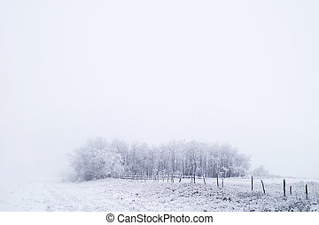 Prairie Fog - Group of trees on a prairie landscape engulfed...