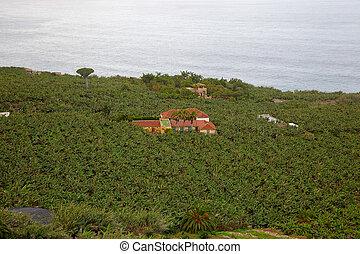 Banana plantation in Tenerife, Canary Islands, Spain