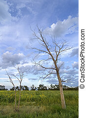 Dead Tree Landscape - Prairie Landscape with a row of dead...
