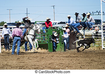Calf Roping at the Herbert Rodeo