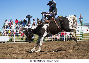 Saddle Bronc riding at the Herbert Rodeo