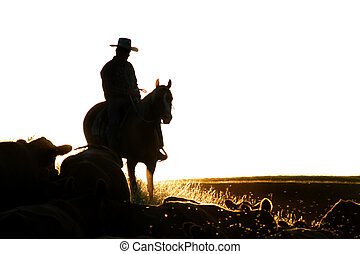 Cattle Round Up - Cowboys on a cattle round up