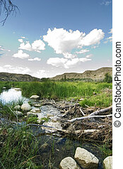 Beaver Dam - Beaver dam on the swift current creek near...