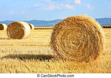Field of freshly cut bales on farmer field