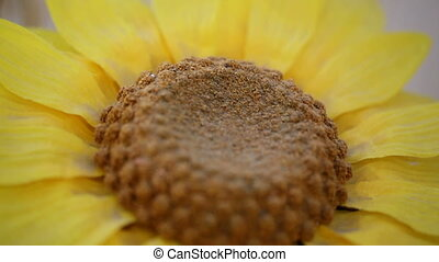 sunflower wheat