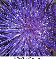 Thistle - Closeup from a purple thistle flower showing its...