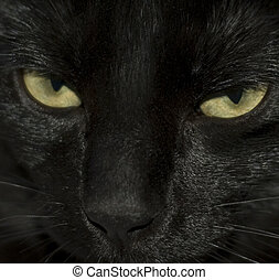 Cats Eyes - Close-up of black cats eyes