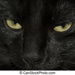 gatos, ojos