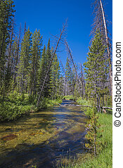Small stream in Idaho mountains - Small trout stream in...