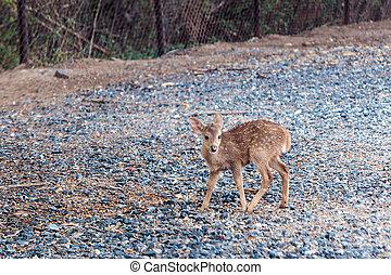 Brown wild deer - Brown wild female deer standing in park