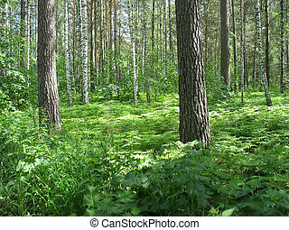 Mixed forest. Summer landscape - Beautiful summer landscape....
