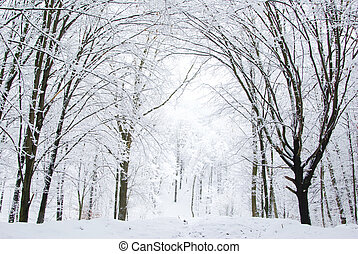 winter forest - beautiful winter forest and the road