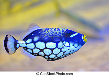 colorful butterfly-fish in an aquarium