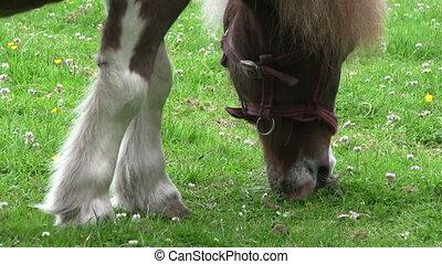 Pony grazing in a field