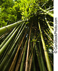 Bamboo trees ground view