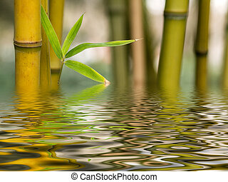 bambú, agua, reflexión