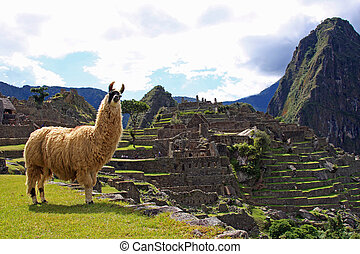 Welcome to Machu Picchu - Llama welcomes visitors to Machu...