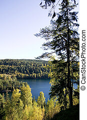 Forest Lake - A lake in the middle of a forest Near Oslo, in...