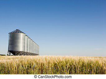 Prairie Harvest - A wheat field with grain bins