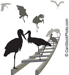 Storks on a ladder