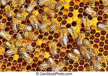 working bees on honey cells - macro shot of bees swarming on...