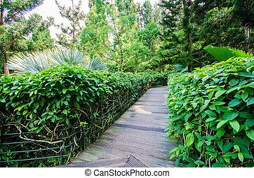 Walkway Path through the Garden