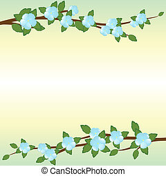 The branches of apple trees - Blossoming branches of apple...
