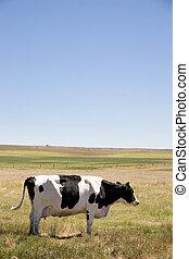 vaca, el golpear con fuerza, moscas