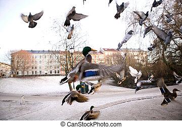 menekülés,  sihlouette, madarak