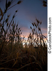 Wheat Field Sunset - A sunset in a what field