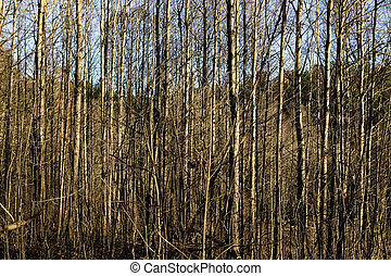 Woods Texture - A texture background image of many thin...