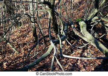 Woods Texture - A texture background image of gnarled tree...