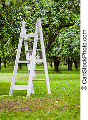 wooden staircase in the apple garden - shallow depth of...