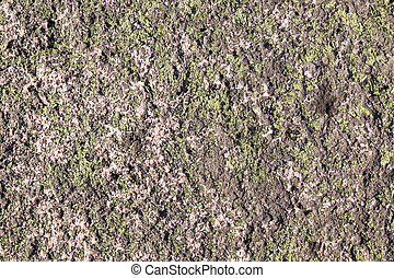 Rock Texture - A rough granite rock texture covered in a dry...
