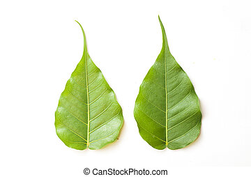 Close-up of two green leaves