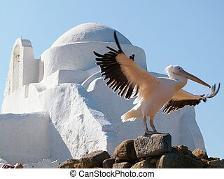Large White Mykonos Pelican - One of the large pelicans of...