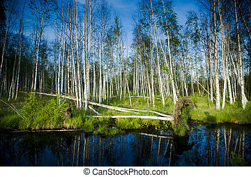 Wetland marshes - The wetland marshes from eastern of...