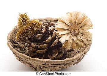 pino, Enchufes, paja, flor