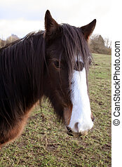 Close Up of a Horse - Close Up of Horse standing in fiels