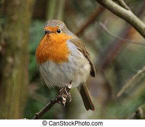 Robin checking out his territory