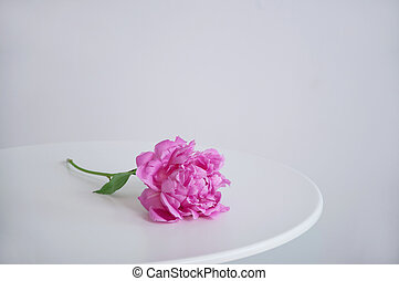 Peony on the table