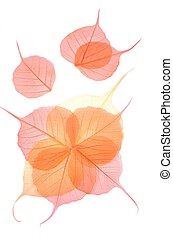 Dry colored leaves over white background