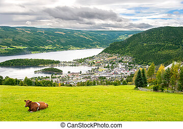 Rural scene with cow in Norway