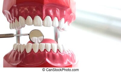 Dentist inspects teeth of toy jaw by mirror at dental...