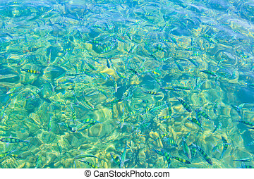 Fish in the sea and coral thailand