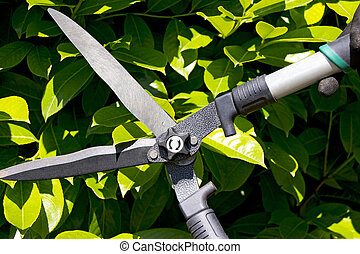 Pruning a Hedge - Garden shears cutting a hedge in the...