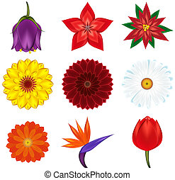Collection of popular and exotic flowers - vector illustration.