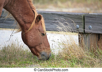 brown horse head - one young wild brown horse portrait...