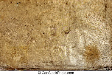 Vellum texture - authentic 17th century vellum texture from...