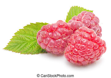 red raspberry fruits isolated on white background